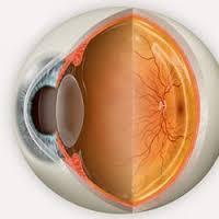 eyeballcrosssection